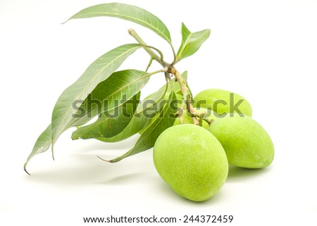 Green mangoes with leafs isolated on white background for sour fruits - stock photo