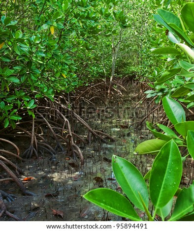 green mangrove forest in east of thailand - stock photo