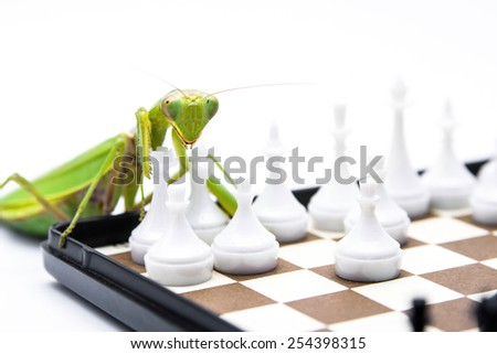 Green mantis playing chess on the chess board, close up, selective focus. Mantodea, Mantopter. - stock photo