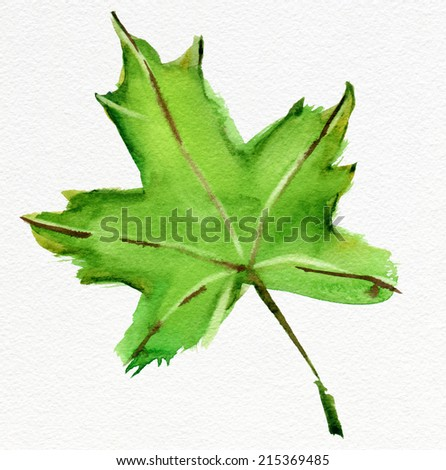 Green maple leaf. Watercolor. - stock photo