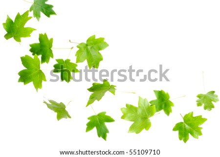 Green maple leaves falling and spinning isolated on white - stock photo