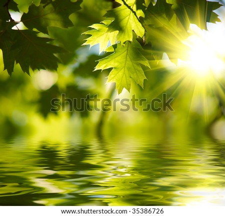 Green maple leaves reflecting in the water - stock photo