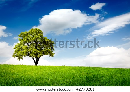Green meadow and lonely tree