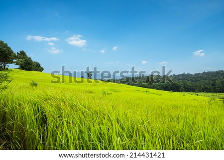 Green meadow and mountains,Khao Yai national park, Thailand