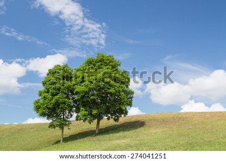 Green meadow and tree with blue sky and could. - stock photo