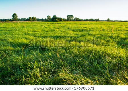 Green meadow at sunrise - stock photo