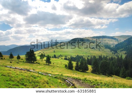 Green meadow between and forest in Tatras, Slovakia