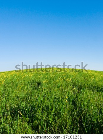 green meadow, blue sky with convex horizon