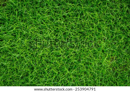 Green meadow grass field