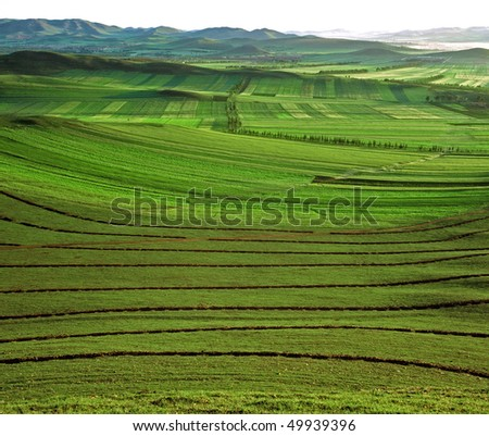 Green meadow in Bashang grassland, Chengde, China. - stock photo