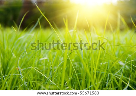 Green meadow in summer sun rays - stock photo