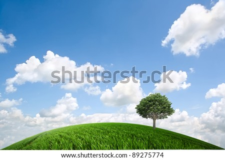 Green meadow in the daytime - stock photo