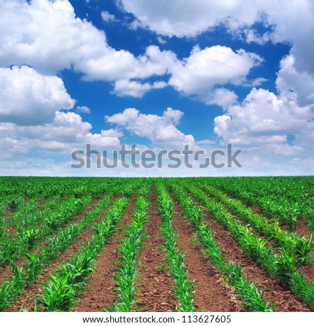 Green meadow of rows. Nature composition. - stock photo