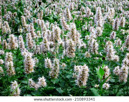 Green meadow of wildflowers growing in summer time - stock photo