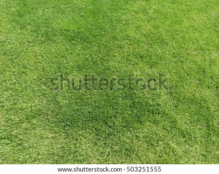 Green meadow or lawn useful as a grass background