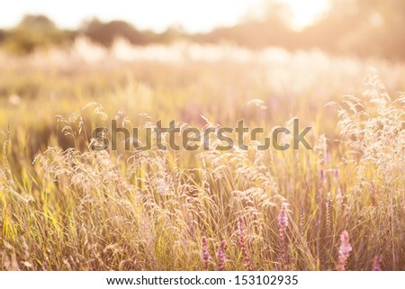 Green meadow under blue sky. - stock photo