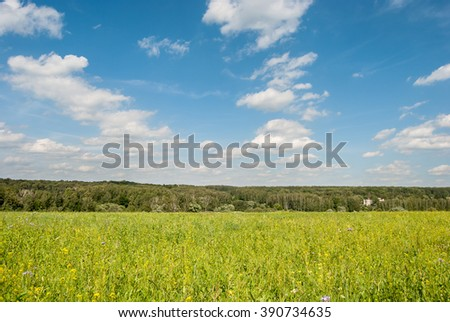Green meadow under blue sky with clouds and forest in distance. Beautiful landscape image. Background picture for different purposes. - stock photo