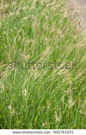 Green meadow when the wind blows. - stock photo