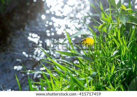 Green meadow with a dandelion, a stream flows on background - stock photo