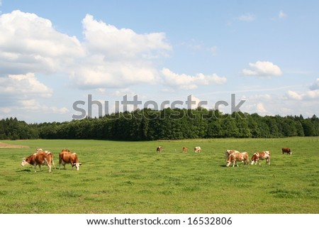 Green meadow with cows under a blue sky with clouds. - stock photo