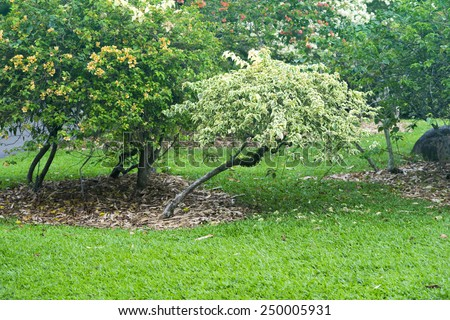 green meadow with different blossom plants in Singapore Botanical garden