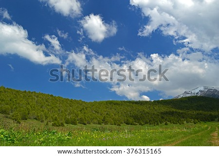 Green meadow with juniper trees in background, Haidarkan area, Kyrgyzstan - stock photo