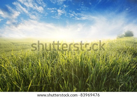 Green meadow with morning sunlight. - stock photo