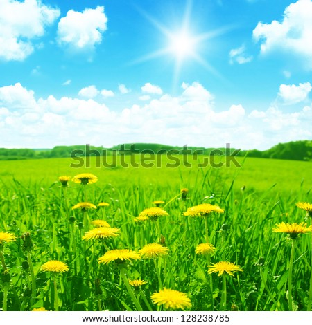 Green meadow with yellow dandelions,blue sky and sun. - stock photo
