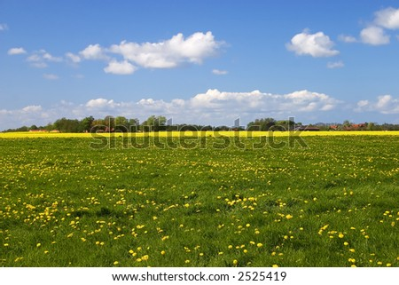 Green meadow with yellow flowers and blue sky with fluffy clouds - stock photo
