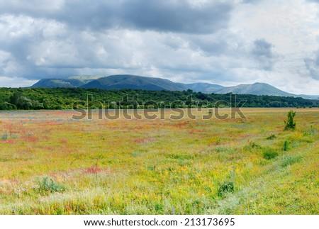 green meadows \ green meadows photo cells on a sunny summer day Crimea - stock photo