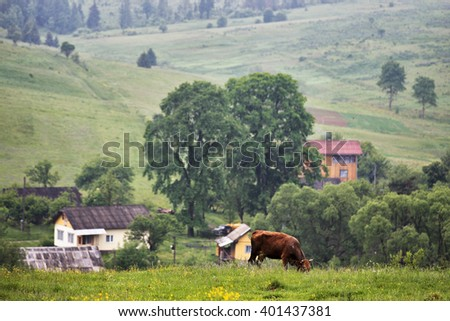 green meadows in a hills with a cow