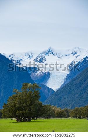 Green meadows, New Zealand  - stock photo