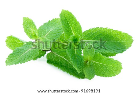 Green mint - stock photo