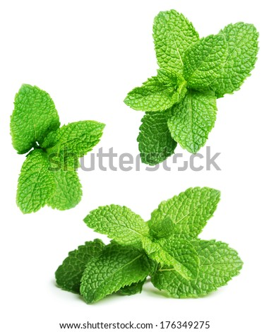 Green mint leaves falling down isolated on white background - stock photo