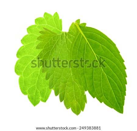 green mint leaves isolated on white background - stock photo