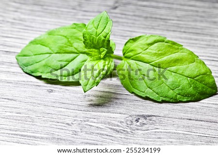 Green mint leaves macro in studio on wood. - stock photo