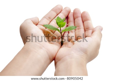Green mint on hand with white background