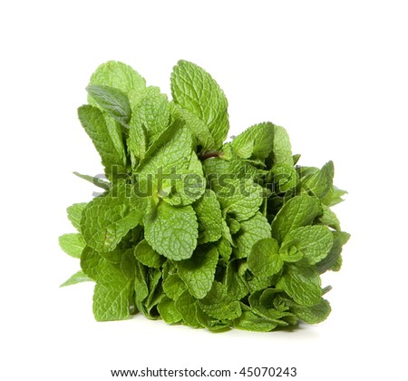 Green mint on white ground - stock photo