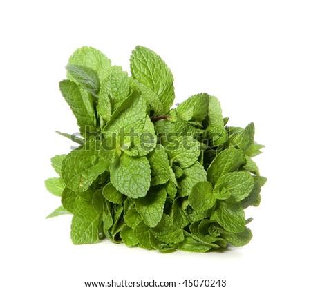 Green mint on white ground - stock photo