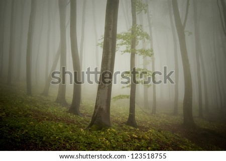 green misty forest after rain - stock photo