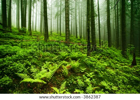 Green Misty Old Forest - stock photo
