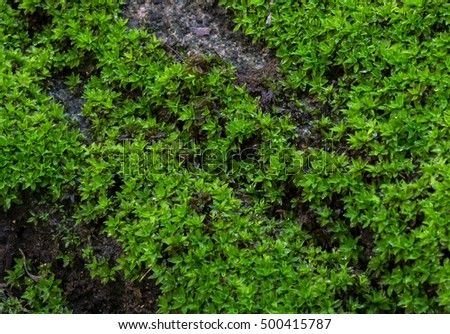 Green Mos Backgroundstone 500415787 further Shutterstock 468077036 as well Grass Meadow Bird Eye View Plenty Of Daisy Flowers Gg59801808 also Home Style Living together with Search. on free landscape garden design fresh