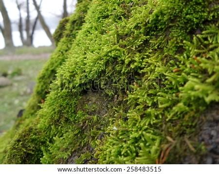 Green moss - stock photo