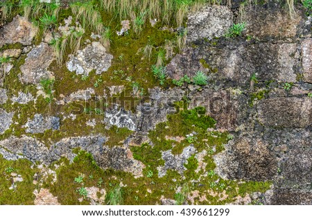 Green moss and grass on old stone wall. - stock photo
