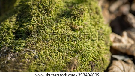Green moss background, selective focus with shallow depth of field. - stock photo