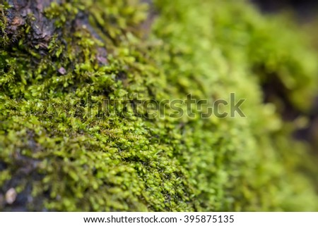 Green moss background / selective focus with shallow depth of field. - stock photo