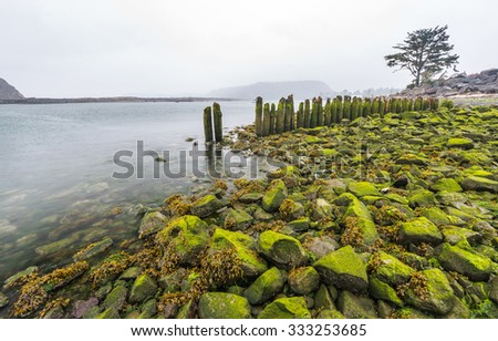 green moss cover the rock ,first beach in Washington coast,scenic view of second beach in mt Olympic National park,Washington,USA. - stock photo
