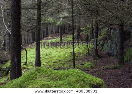 Green moss-covered opening in thick spruce forest on rocky ground in Norway.
