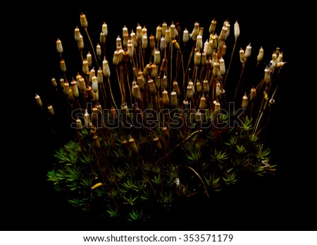 Green moss growing on black background. - stock photo