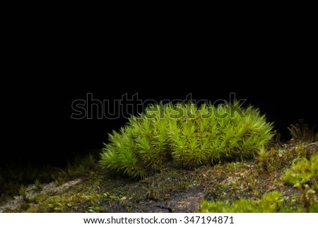 Green moss growing on dead trees with black background. - stock photo